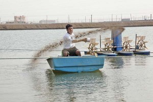 A worker feeding shrimps at a WestCoast shrimp farm near Surat